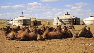 Camel herder family in Gobi Desert