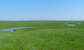 Mongol Daguur in Eastern Mongolia