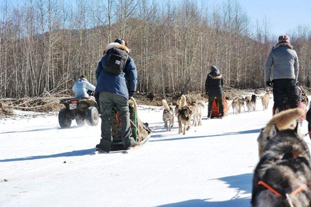 Mongolia dog sledding
