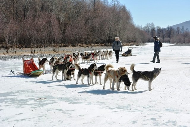 mongolia winter trips