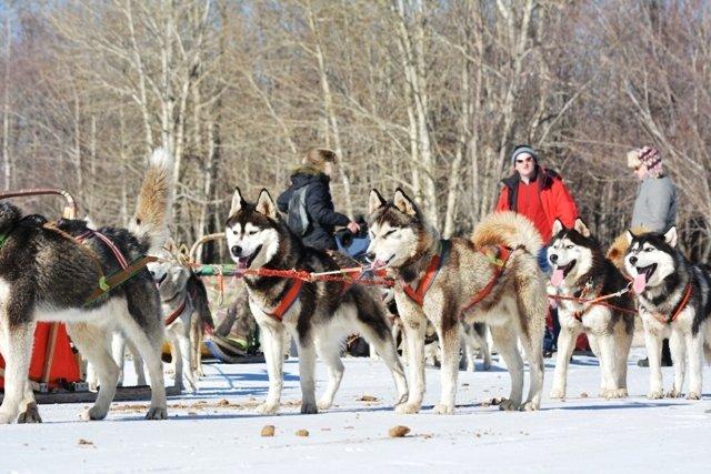 Mongolia winter tour