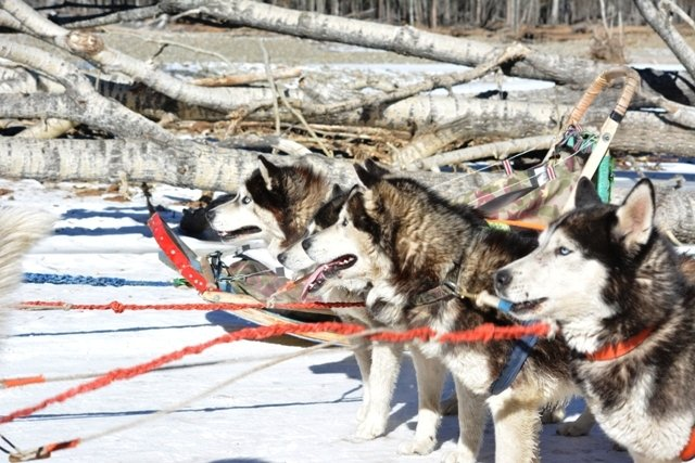 Winter tour in Terelj with dog sledding
