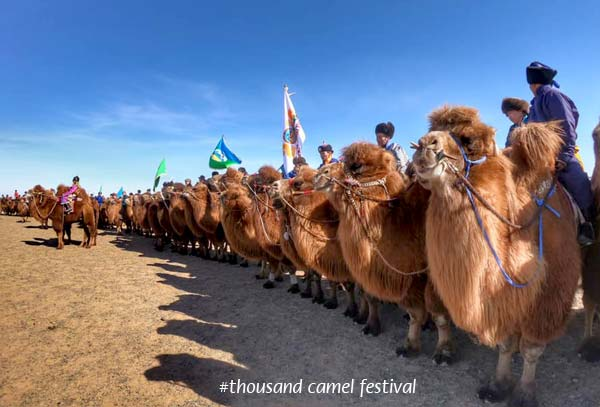 Thousand Camel Festival in Mongolia