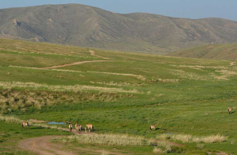 Hustai National Park in Mongolia