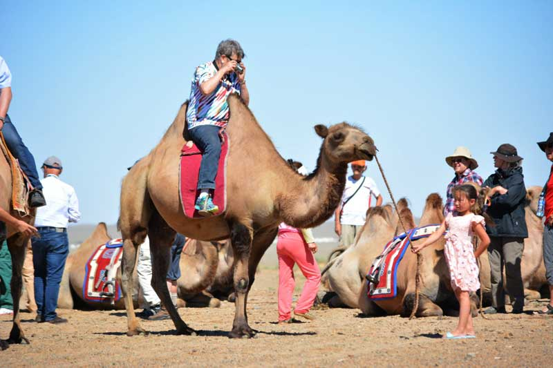 Camel riding in Mongolian gobi