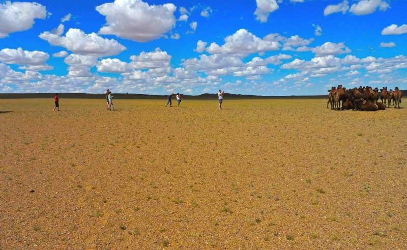 camel in Gobi
