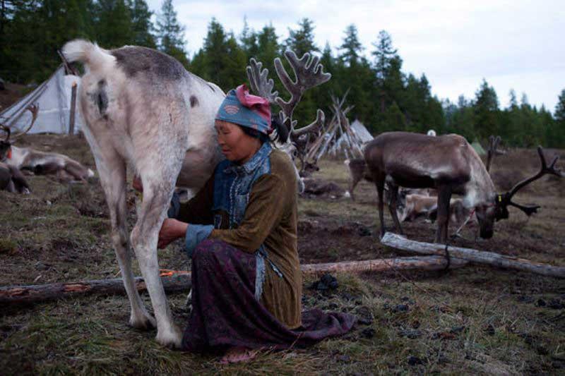 Reindeer herder Tsaatan family in Khuvsgul