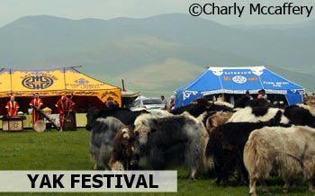 Yaks in Mongolia