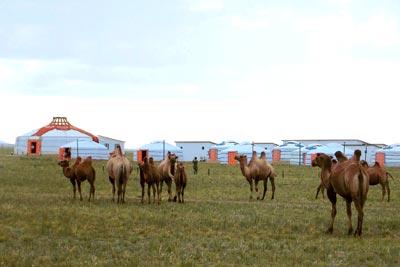 Gobi Nomad Lodge in Mongolia Yurt